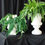 Potted Fern rental